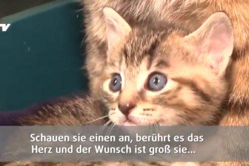 Eine kleine getigerte Katze aus dem Tierheim.
