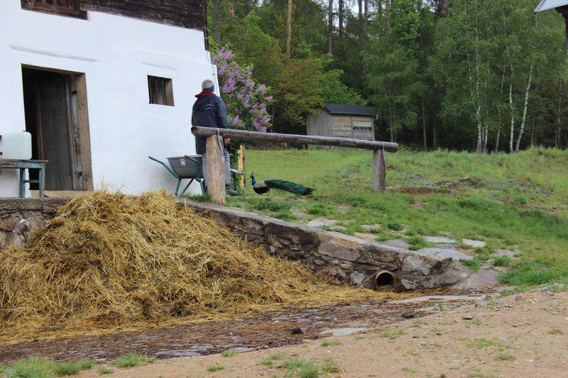 Ein Mensch fährt eine Schubkarre weg vom Misthaufen vor dem Bauernhof.