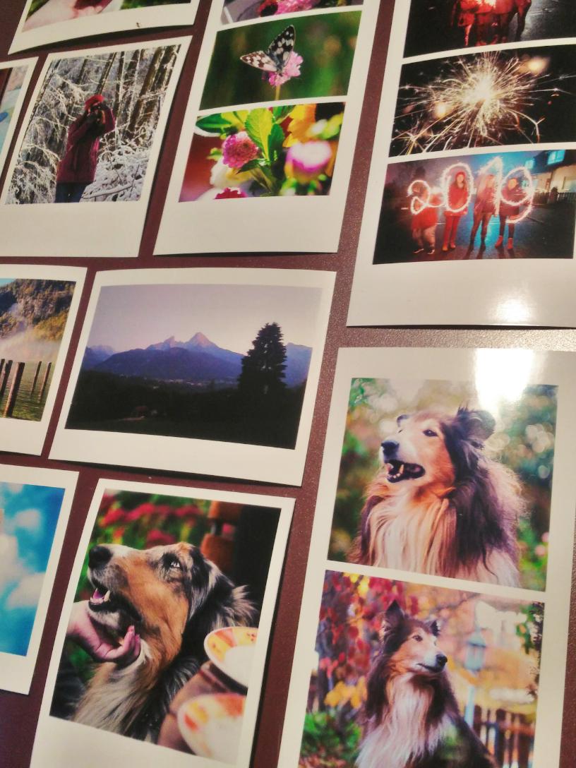 Auf dem Foto sind viele Schnappschüsse von Hunden, Menschen und Landschaften.